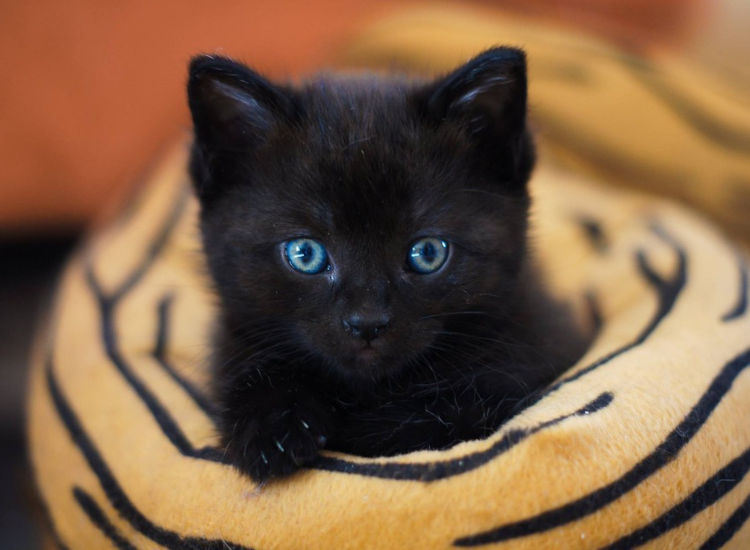 Ημέρα της Μαύρης Γάτας