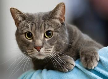 Παγκόσμια Ημέρα Γάτας