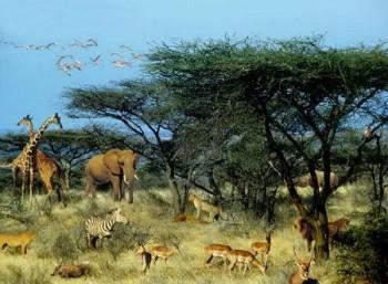 Απέραντη σαβάνα η Δράμα πριν από 9 εκατομμύρια χρόνια