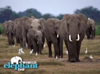 Παγκόσμια Ημέρα του Ελέφαντα