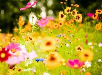 Τα φυτά με άνθη εμφανίστηκαν 100 εκατ. χρόνια νωρίτερα από τις έως τώρα εκτιμήσεις